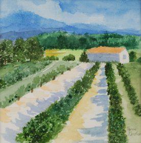 MARCIA WEIDLER - Vineyard Near Charlottesville Va