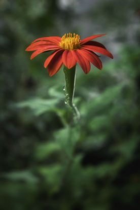 John J. Young - The Flowers Still Grow 2