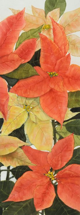 KARIN SEBOLKA - Poinsettia