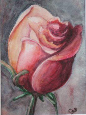 Claire Bentley - Rose