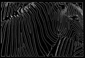 Rick Reda - Zebras