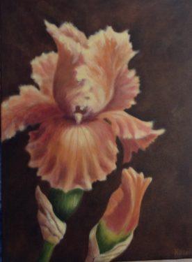 Margaret Hillen - Iris