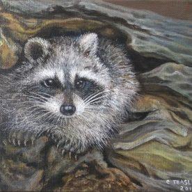 Cute Racoon - Chong Teasley