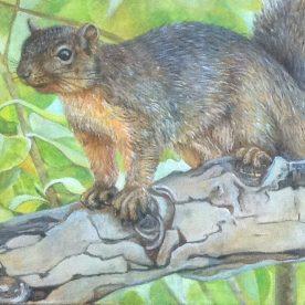 Friendly Squirrel - Chong Teasley