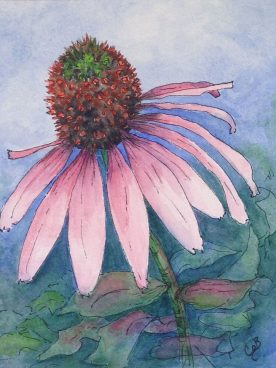 Claire Bentley - Pink Cone Flower